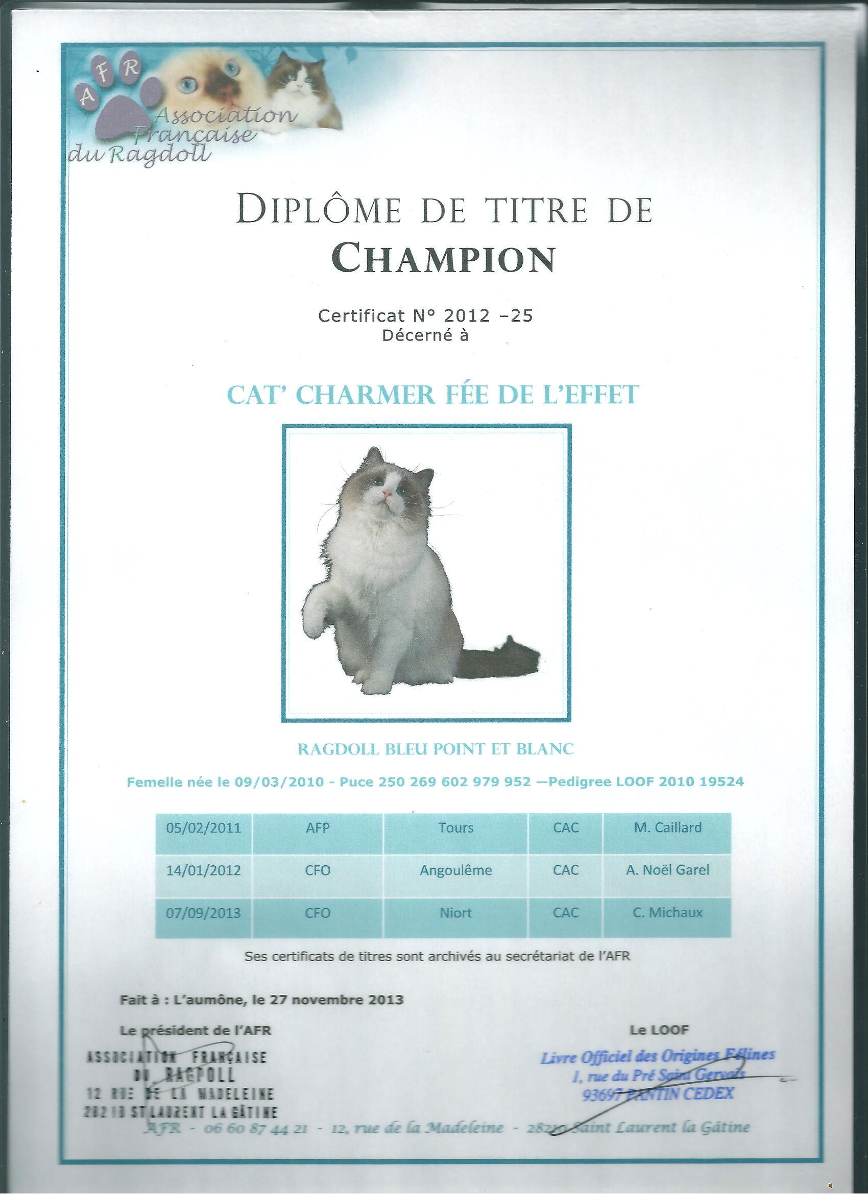 chat e Angoulême